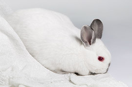 Rabbit Grooming   Pet Kiosk