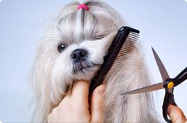 Dog Grooming   Pet Kiosk