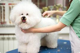 Pet Grooming in Singapore   Pet Kiosk